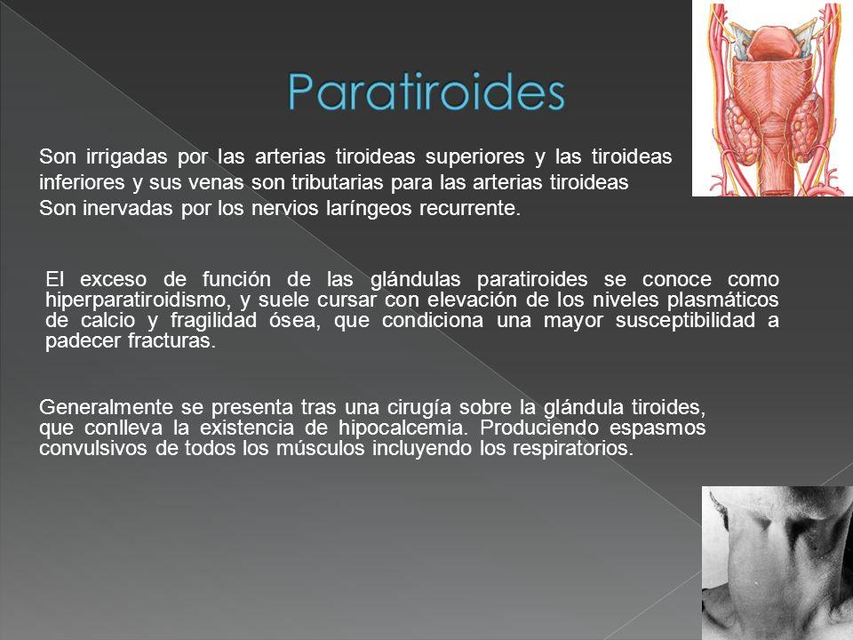 Son irrigadas por las arterias tiroideas superiores y las tiroideas inferiores y sus venas son tributarias para las arterias tiroideas Son inervadas p