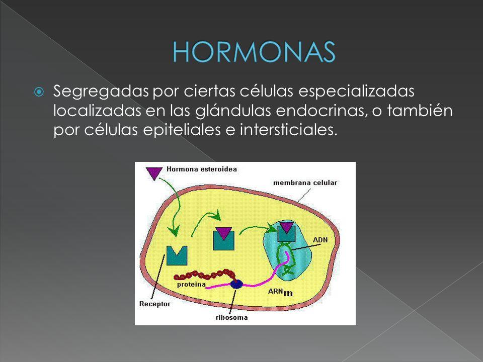 Segregadas por ciertas células especializadas localizadas en las glándulas endocrinas, o también por células epiteliales e intersticiales.