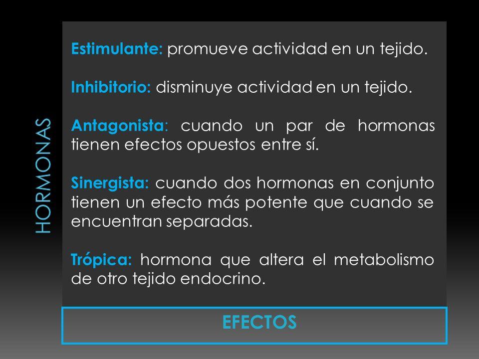 EFECTOS Estimulante: promueve actividad en un tejido. Inhibitorio: disminuye actividad en un tejido. Antagonista : cuando un par de hormonas tienen ef