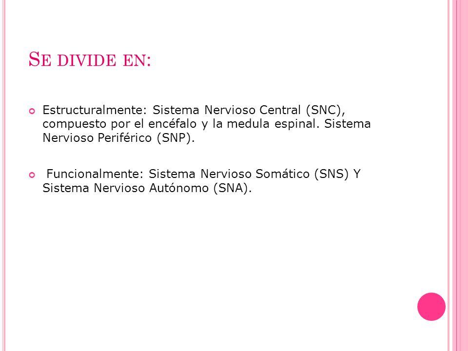 S E DIVIDE EN : Estructuralmente: Sistema Nervioso Central (SNC), compuesto por el encéfalo y la medula espinal. Sistema Nervioso Periférico (SNP). Fu