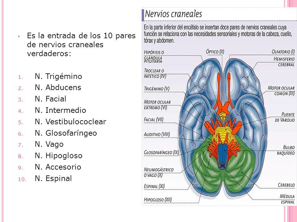 Es la entrada de los 10 pares de nervios craneales verdaderos: 1. N. Trigémino 2. N. Abducens 3. N. Facial 4. N. Intermedio 5. N. Vestibulococlear 6.