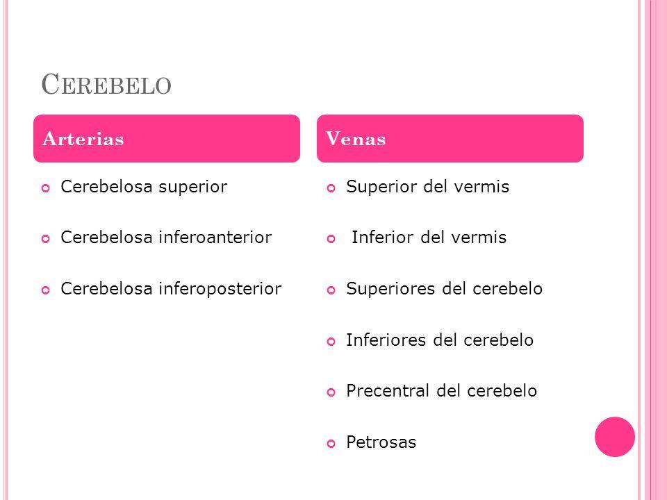 C EREBELO Cerebelosa superior Cerebelosa inferoanterior Cerebelosa inferoposterior Superior del vermis Inferior del vermis Superiores del cerebelo Inf