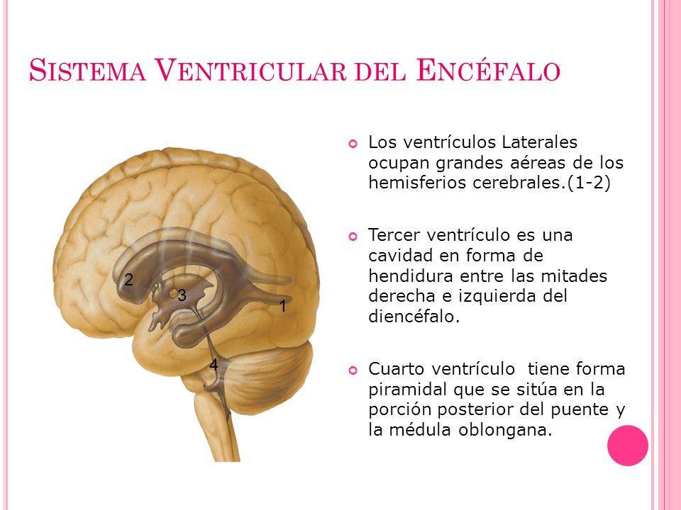S ISTEMA V ENTRICULAR DEL E NCÉFALO Los ventrículos Laterales ocupan grandes aéreas de los hemisferios cerebrales.(1-2) Tercer ventrículo es una cavid