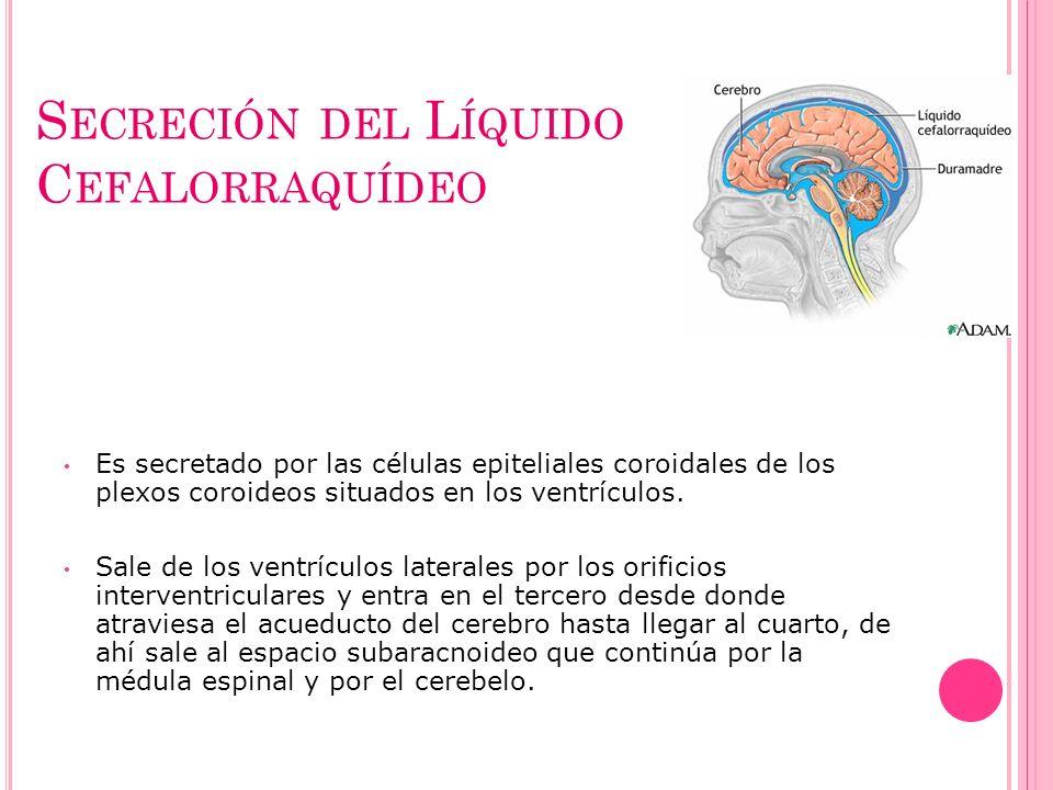 S ECRECIÓN DEL L ÍQUIDO C EFALORRAQUÍDEO Es secretado por las células epiteliales coroidales de los plexos coroideos situados en los ventrículos. Sale