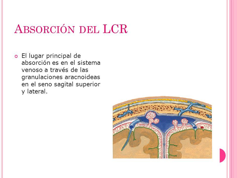 A BSORCIÓN DEL LCR El lugar principal de absorción es en el sistema venoso a través de las granulaciones aracnoideas en el seno sagital superior y lat