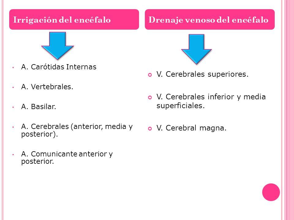 A. Carótidas Internas A. Vertebrales. A. Basilar. A. Cerebrales (anterior, media y posterior). A. Comunicante anterior y posterior. V. Cerebrales supe