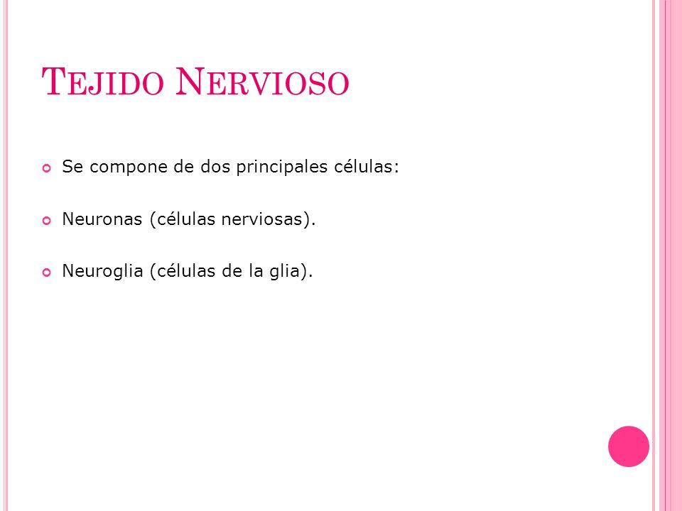 T EJIDO N ERVIOSO Se compone de dos principales células: Neuronas (células nerviosas). Neuroglia (células de la glia).