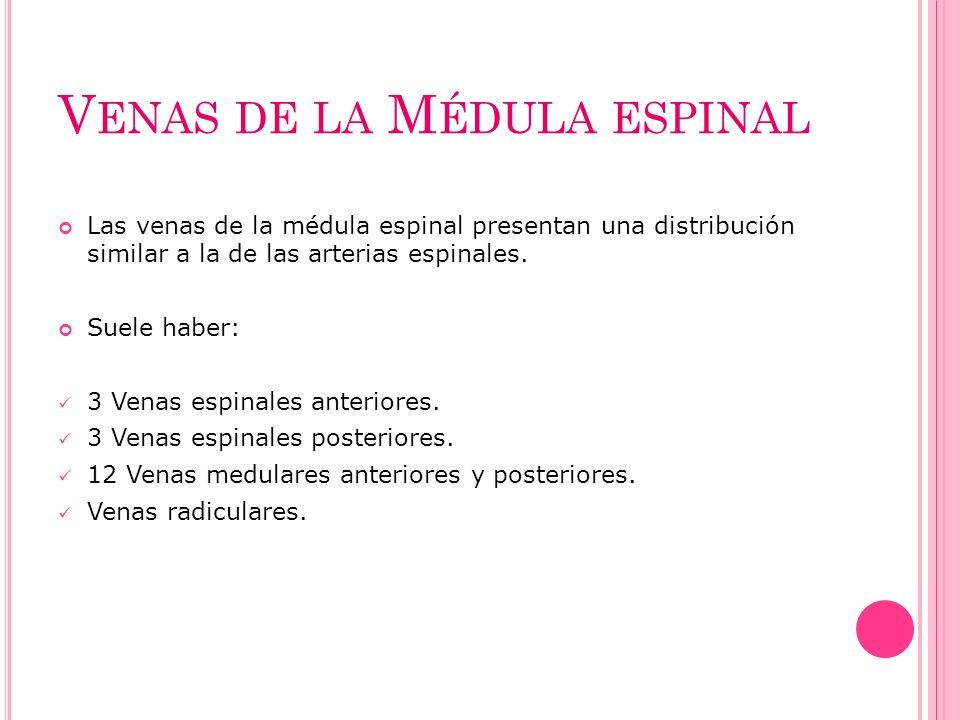 V ENAS DE LA M ÉDULA ESPINAL Las venas de la médula espinal presentan una distribución similar a la de las arterias espinales. Suele haber: 3 Venas es