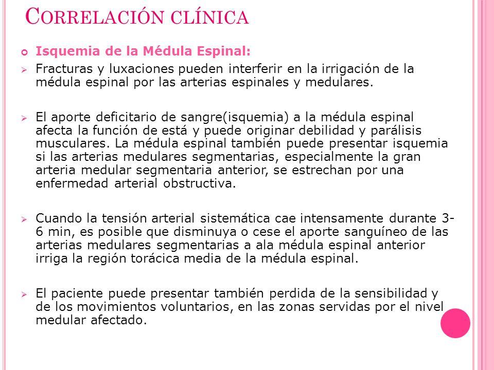 C ORRELACIÓN CLÍNICA Isquemia de la Médula Espinal: Fracturas y luxaciones pueden interferir en la irrigación de la médula espinal por las arterias es
