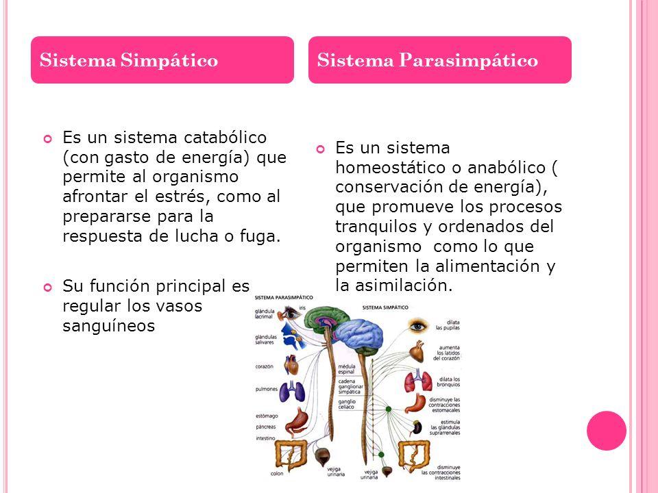 Es un sistema catabólico (con gasto de energía) que permite al organismo afrontar el estrés, como al prepararse para la respuesta de lucha o fuga. Su