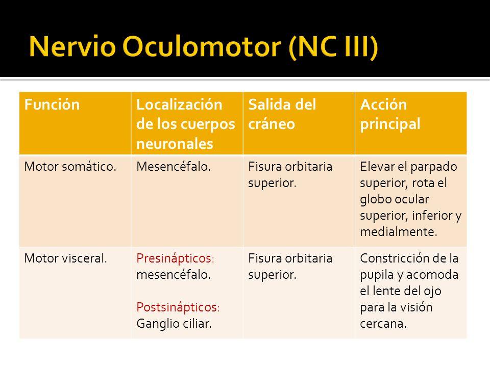 Nervio Oculomotor NCIII