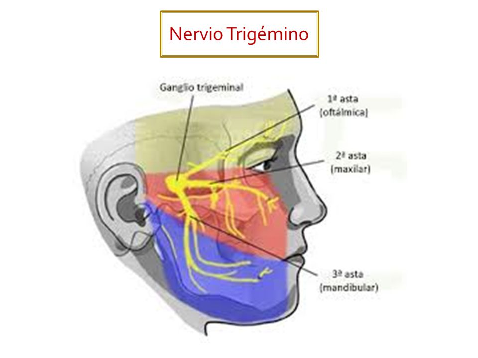 FunciónLocalización de los cuerpos neuronales Salida del cráneo Acción principal Motor somático (Branquial).