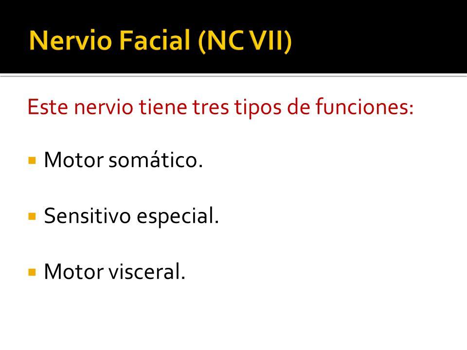 Localización de los cuerpos neuronales Salida del cráneoAcción principal Puente troncoencefálico.