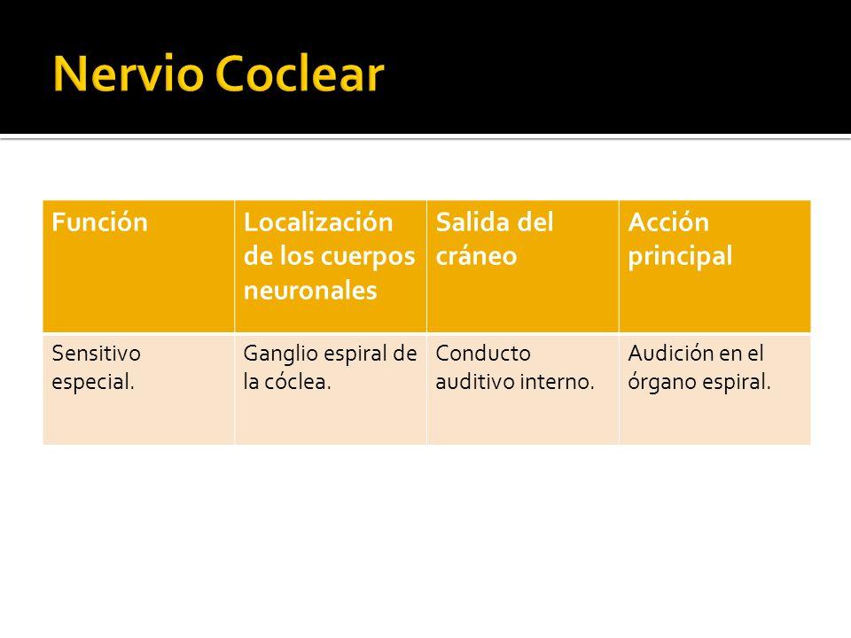 Nervio Vestibulococlear (NC VIII)