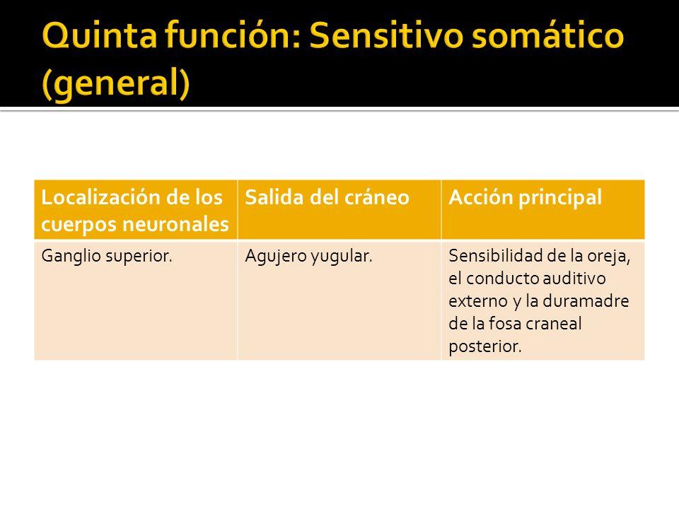 Localización de los cuerpos neuronales Salida del cráneoAcción principal Ganglio superior.Agujero yugular.Sensibilidad de la oreja, el conducto auditi