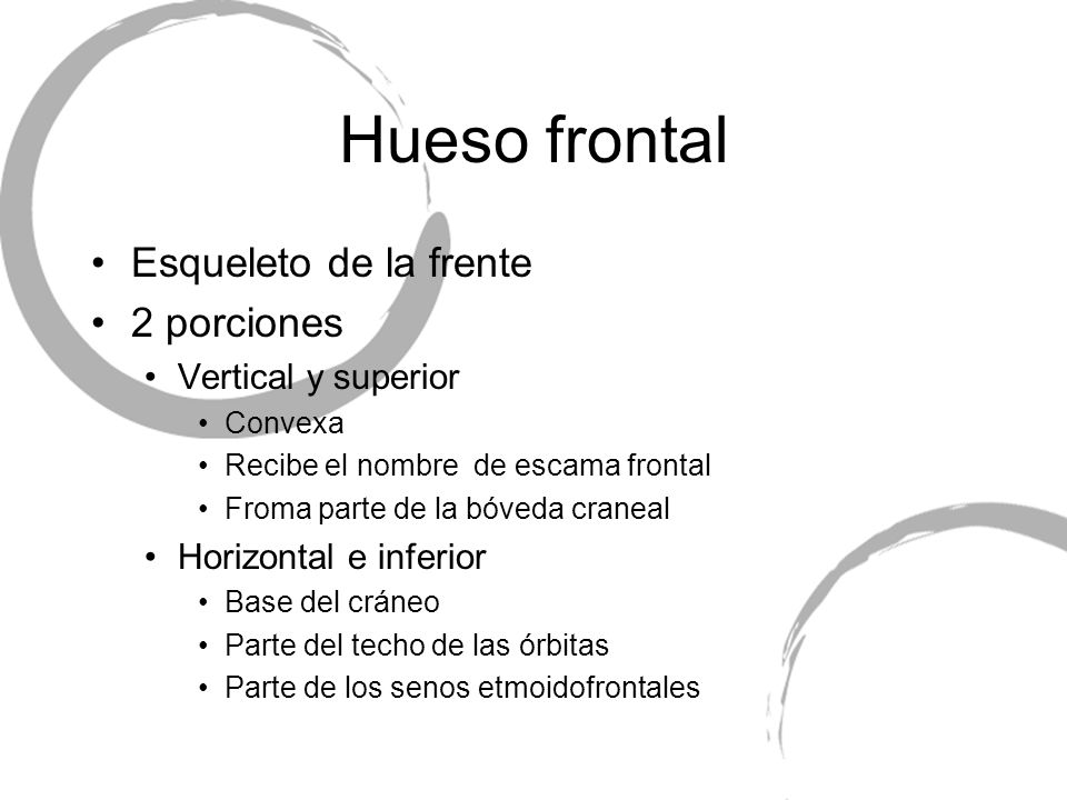 Hueso frontal Esqueleto de la frente 2 porciones Vertical y superior Convexa Recibe el nombre de escama frontal Froma parte de la bóveda craneal Horiz