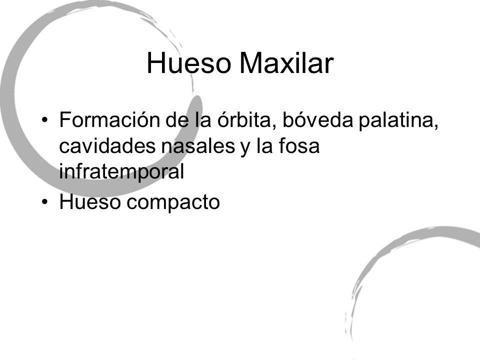 Formación de la órbita, bóveda palatina, cavidades nasales y la fosa infratemporal Hueso compacto