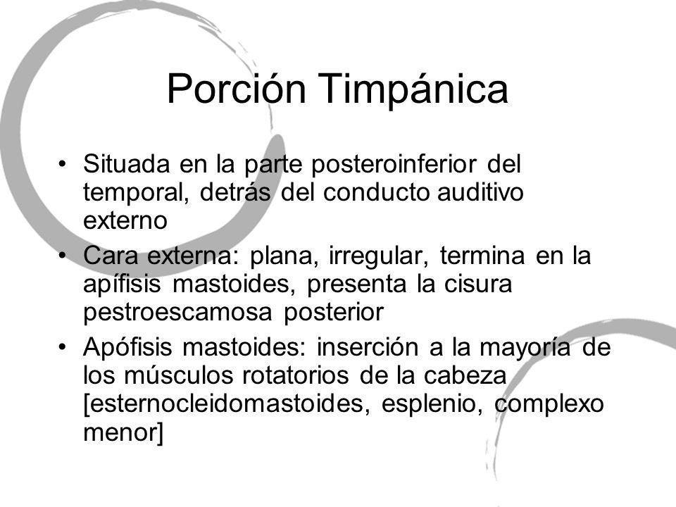 Porción Timpánica Situada en la parte posteroinferior del temporal, detrás del conducto auditivo externo Cara externa: plana, irregular, termina en la