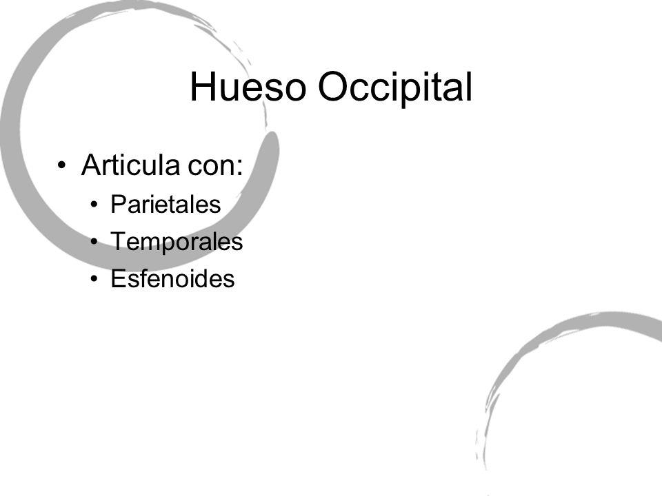 Articula con: Parietales Temporales Esfenoides