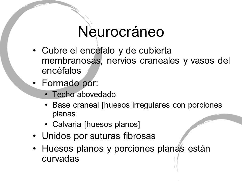 Neurocráneo Cubre el encéfalo y de cubierta membranosas, nervios craneales y vasos del encéfalos Formado por: Techo abovedado Base craneal [huesos irr