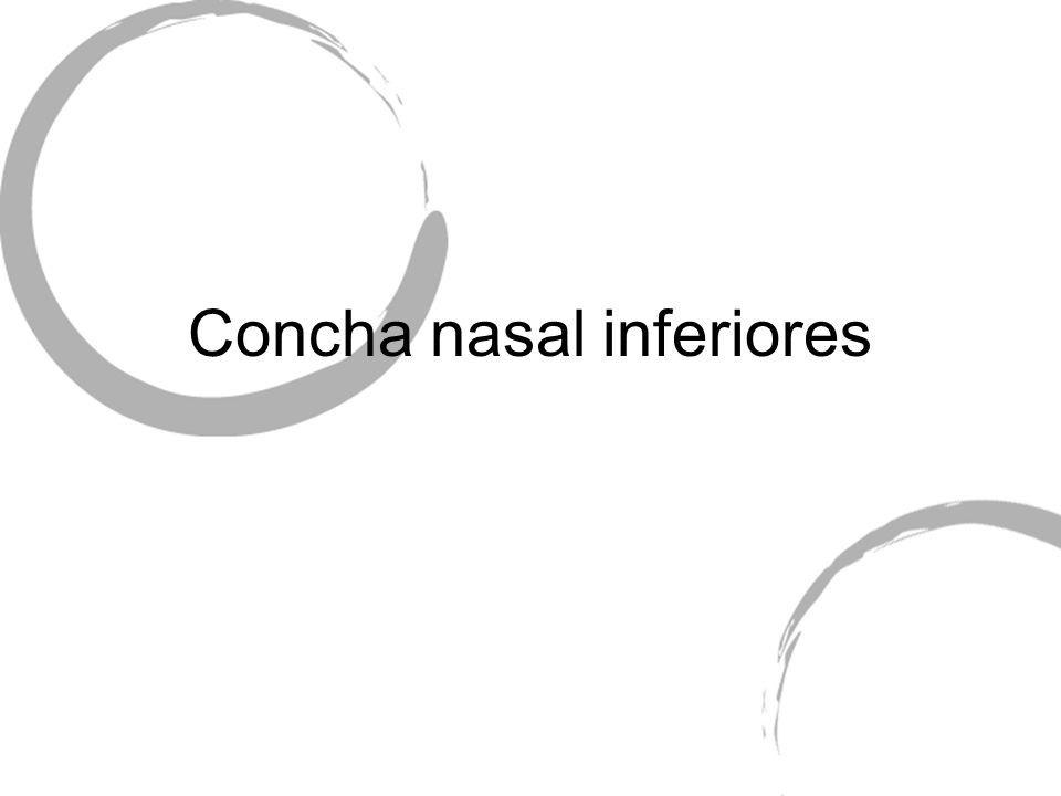 Concha nasal inferiores