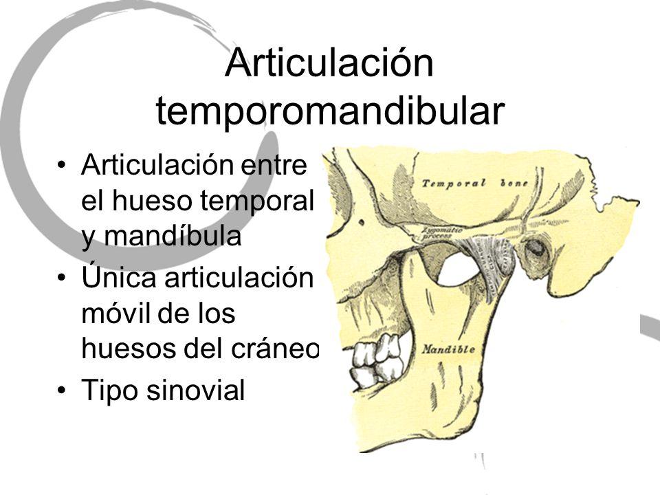 Articulación temporomandibular Articulación entre el hueso temporal y mandíbula Única articulación móvil de los huesos del cráneo Tipo sinovial