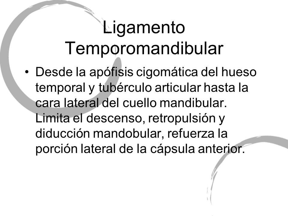 Ligamento Temporomandibular Desde la apófisis cigomática del hueso temporal y tubérculo articular hasta la cara lateral del cuello mandibular. Limita