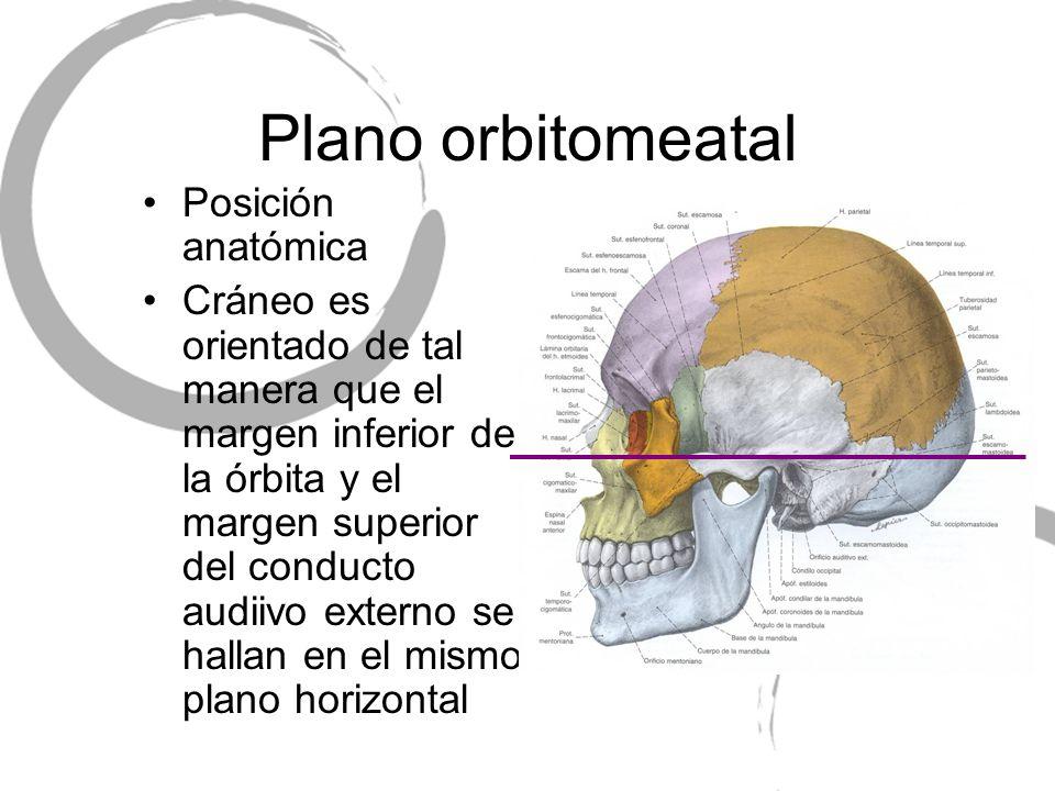 Plano orbitomeatal Posición anatómica Cráneo es orientado de tal manera que el margen inferior de la órbita y el margen superior del conducto audiivo