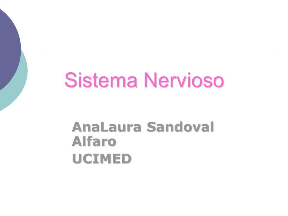 Sistema Nervioso AnaLaura Sandoval Alfaro UCIMED