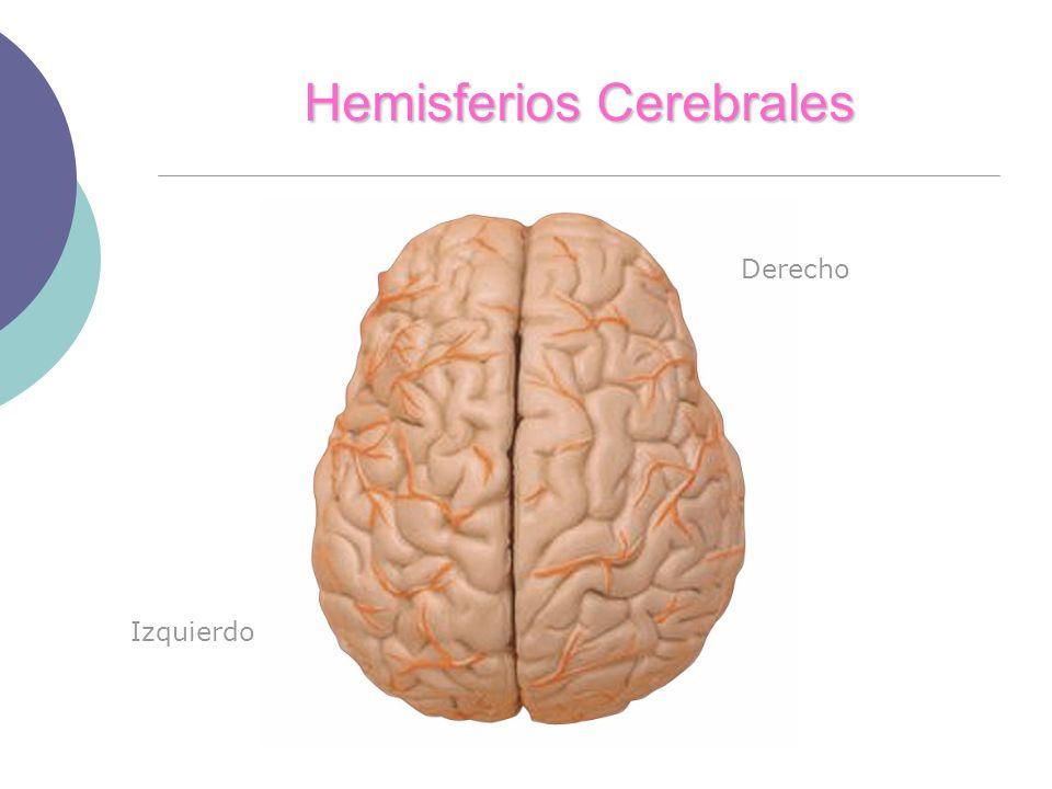 Hemisferios Cerebrales Derecho Izquierdo
