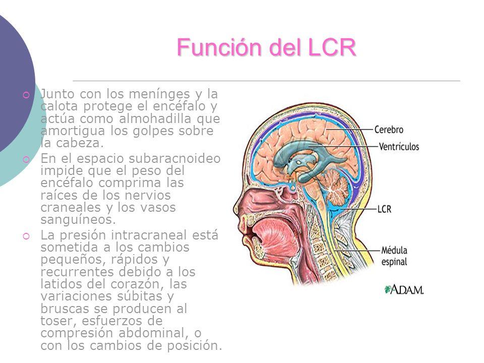 Función del LCR Junto con los menínges y la calota protege el encéfalo y actúa como almohadilla que amortigua los golpes sobre la cabeza. En el espaci