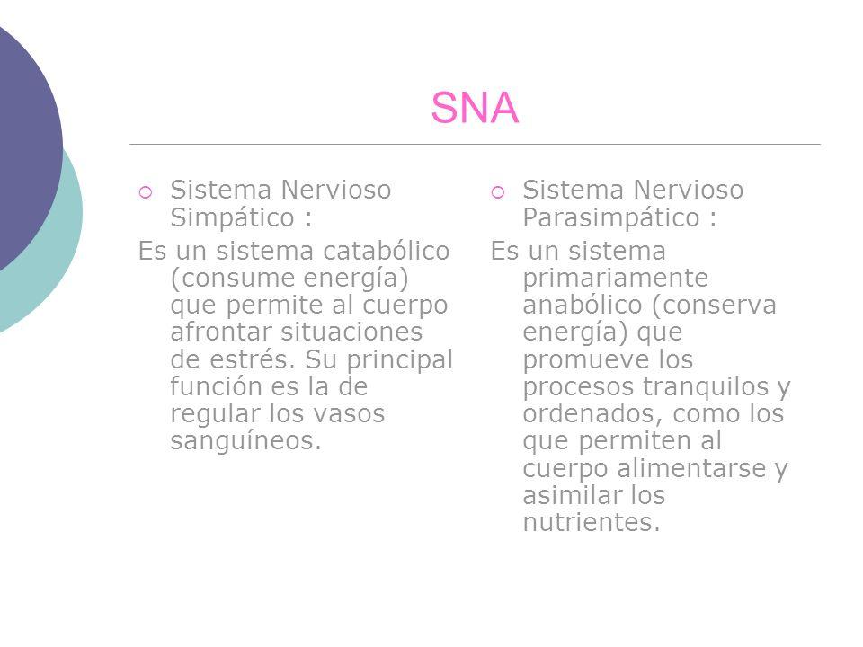 SNA Sistema Nervioso Simpático : Es un sistema catabólico (consume energía) que permite al cuerpo afrontar situaciones de estrés. Su principal función