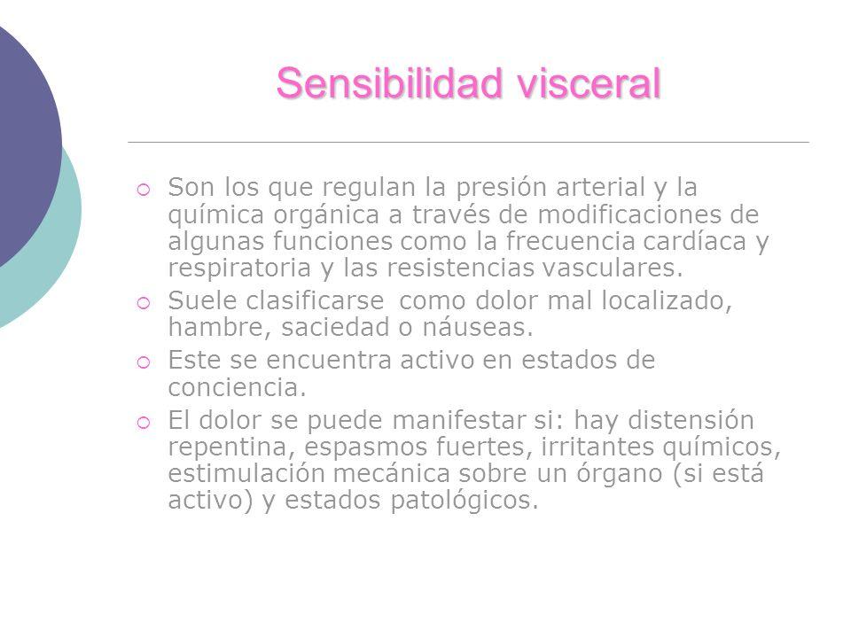 Sensibilidad visceral Son los que regulan la presión arterial y la química orgánica a través de modificaciones de algunas funciones como la frecuencia