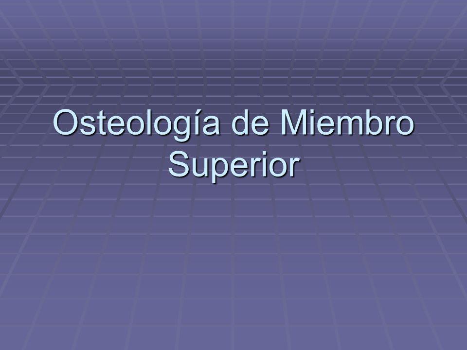 Osteología de Miembro Superior