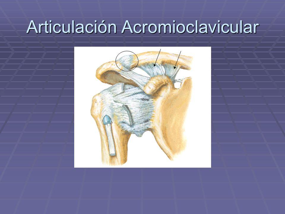 Articulación Acromioclavicular
