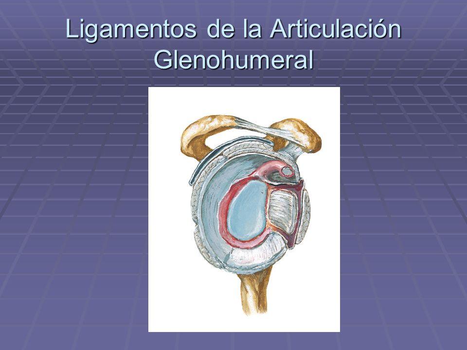 Ligamentos de la Articulación Glenohumeral