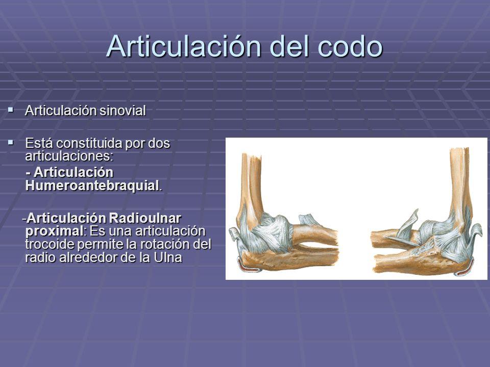 Articulación del codo Articulación sinovial Articulación sinovial Está constituida por dos articulaciones: Está constituida por dos articulaciones: -