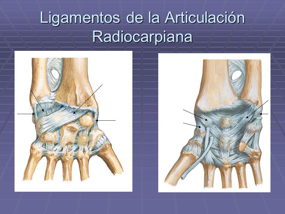 Ligamentos de la Articulación Radiocarpiana