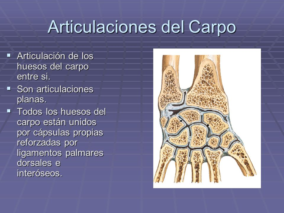 Articulaciones del Carpo Articulación de los huesos del carpo entre si. Articulación de los huesos del carpo entre si. Son articulaciones planas. Son