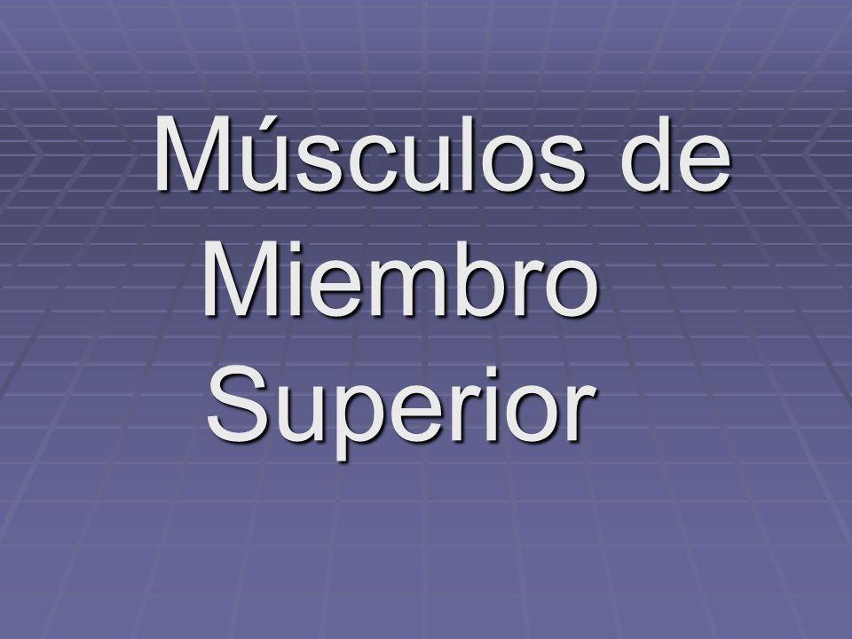 Músculos de Miembro Superior Músculos de Miembro Superior