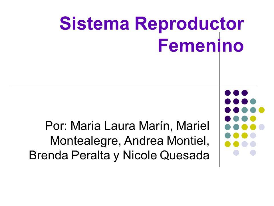 Sistema Reproductor Femenino Por: Maria Laura Marín, Mariel Montealegre, Andrea Montiel, Brenda Peralta y Nicole Quesada