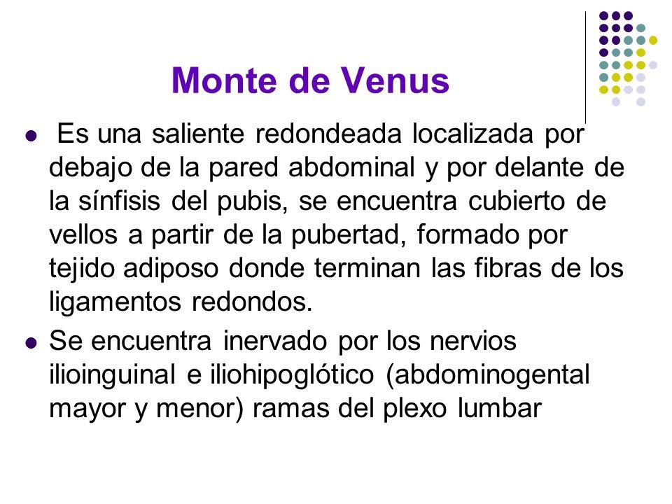 Monte de Venus Es una saliente redondeada localizada por debajo de la pared abdominal y por delante de la sínfisis del pubis, se encuentra cubierto de
