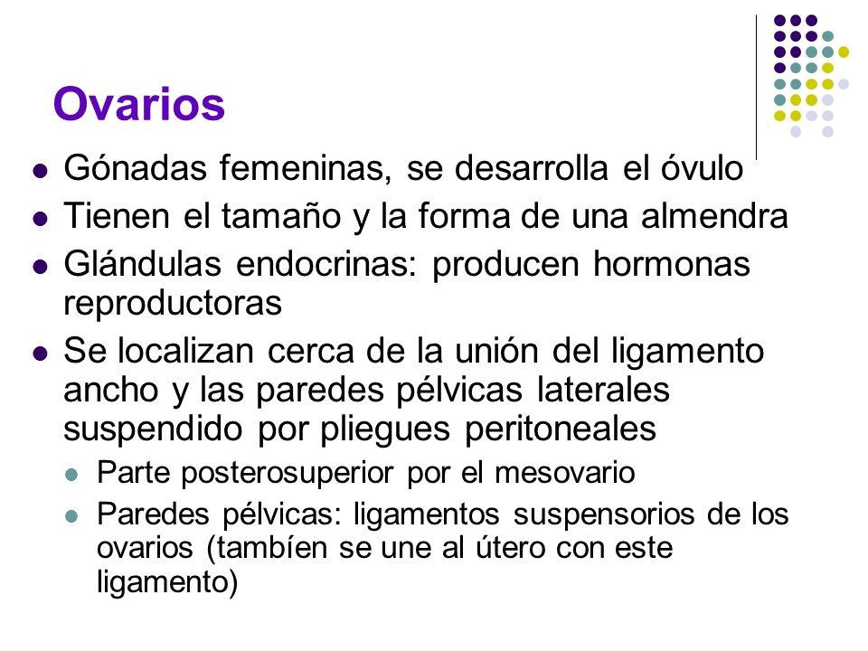 Ovarios Gónadas femeninas, se desarrolla el óvulo Tienen el tamaño y la forma de una almendra Glándulas endocrinas: producen hormonas reproductoras Se