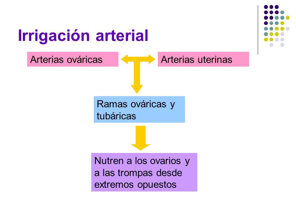 Irrigación arterial Arterias ováricasArterias uterinas Ramas ováricas y tubáricas Nutren a los ovarios y a las trompas desde extremos opuestos