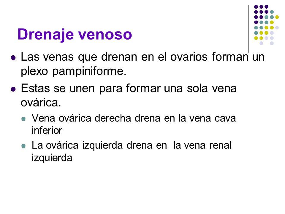 Drenaje venoso Las venas que drenan en el ovarios forman un plexo pampiniforme. Estas se unen para formar una sola vena ovárica. Vena ovárica derecha