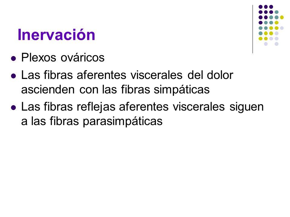Inervación Plexos ováricos Las fibras aferentes viscerales del dolor ascienden con las fibras simpáticas Las fibras reflejas aferentes viscerales sigu