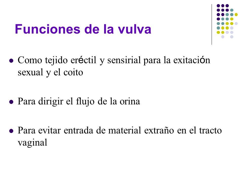 Funciones de la vulva Como tejido er é ctil y sensirial para la exitaci ó n sexual y el coito Para dirigir el flujo de la orina Para evitar entrada de