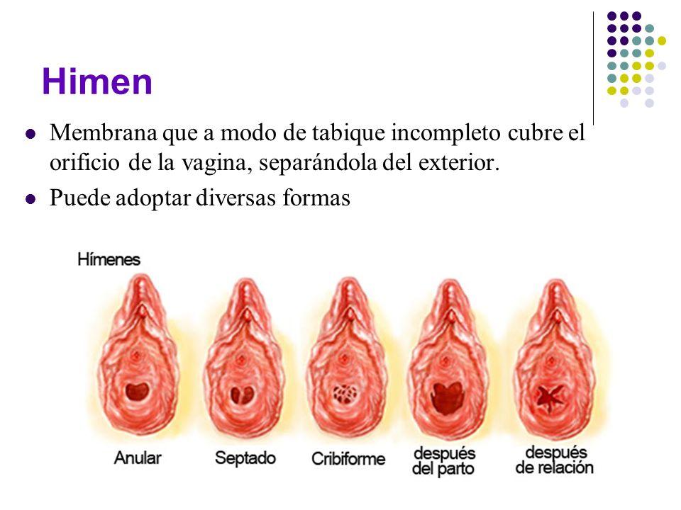 Himen Membrana que a modo de tabique incompleto cubre el orificio de la vagina, separándola del exterior. Puede adoptar diversas formas