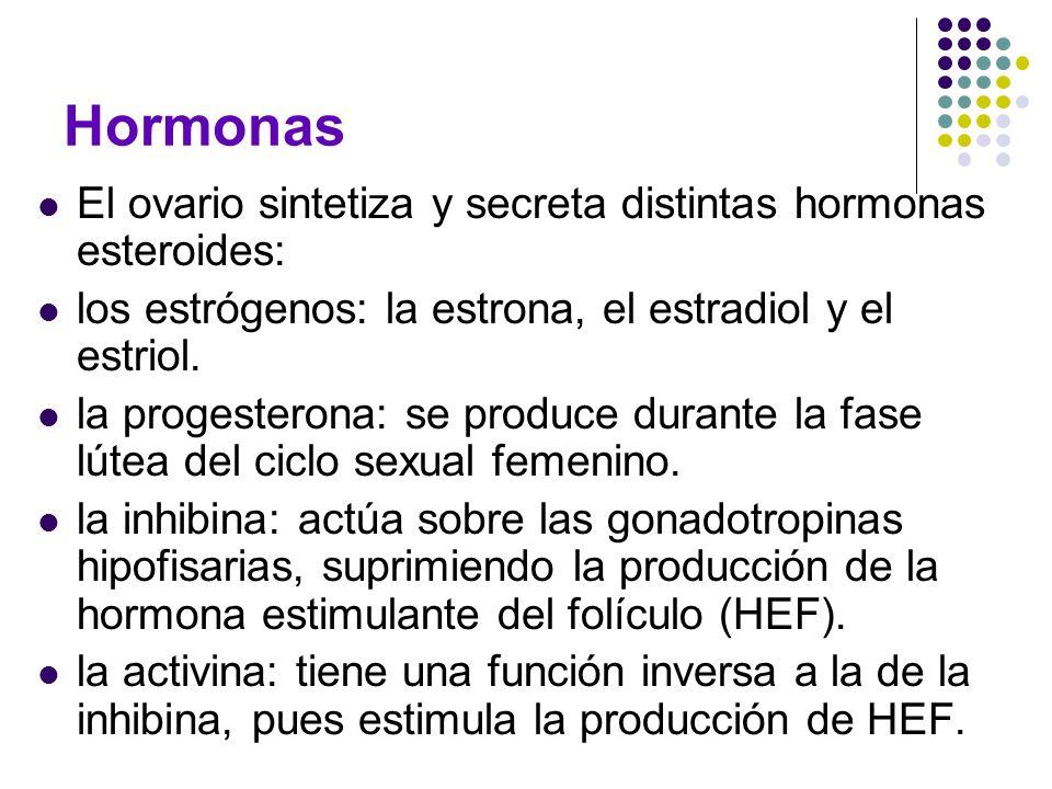 Hormonas El ovario sintetiza y secreta distintas hormonas esteroides: los estrógenos: la estrona, el estradiol y el estriol. la progesterona: se produ