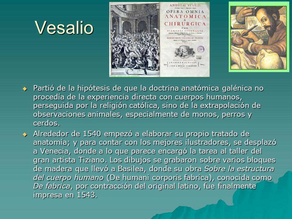Vesalio Partió de la hipótesis de que la doctrina anatómica galénica no procedía de la experiencia directa con cuerpos humanos, perseguida por la reli
